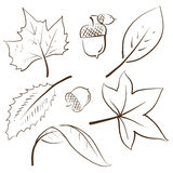 Autumn leaves and acorns Royalty Free Stock Photos