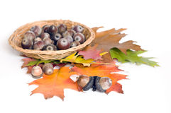 Autumn leaves and acorns basket Stock Photos