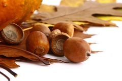 Autumn leaves and acorns frame Royalty Free Stock Photo