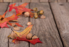 Autumn Leaves and Acorns Stock Photo