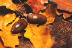 Autumn leaves with acorns over wooden background with empty copy Royalty Free Stock Photos
