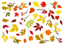 Autumn leaves, acorns and tree branches Royalty Free Stock Images