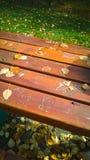 Autumn leaves across a park bench Royalty Free Stock Photos