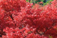Autumn Leaves Of Adashino Nenbutsu-ji Lizenzfreies Stockbild