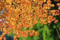 Autumn Leaves Of Adashino Nenbutsu-ji Stockbilder