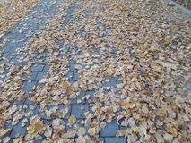 Autumn leaves that adorn the streets of Storkow. In Germany royalty free stock images