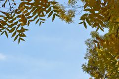 Autumn leaves with blue sky. Autumn leaves against blue sky Royalty Free Stock Image