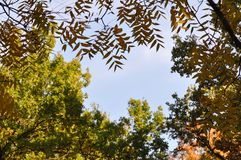 Autumn leaves with blue sky. Autumn leaves against blue sky Stock Images