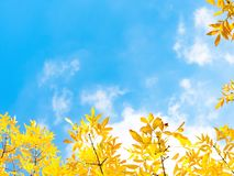 Autumn Leaves Against Blue Sky imagens de stock royalty free