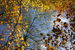 Autumn leaves against a blue sky Royalty Free Stock Images