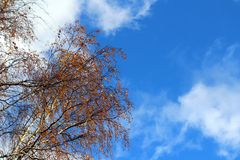 Autumn leaves against the blue sky. Stock Photos