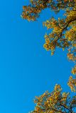 Autumn leaves against blue sky Royalty Free Stock Photos