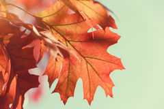 Autumn leaves against blue sky Stock Images