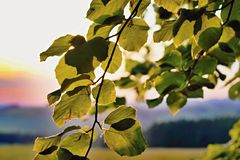 Autumn leaves against the light. royalty free stock photography