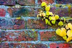 Autumn leaves against red brick wall Stock Photography