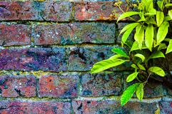 Autumn leaves against red brick wall Royalty Free Stock Image