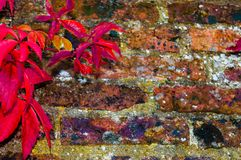 Autumn leaves against red brick wall Stock Photo