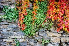 Autumn leaves against a rock wall Royalty Free Stock Photo