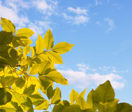 Autumn leaves against sky Stock Image