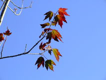 Autumn Leaves. Leaves against an autumn sky Stock Photography