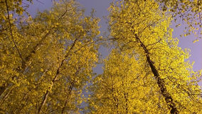 Autumn leaves Stock Photography