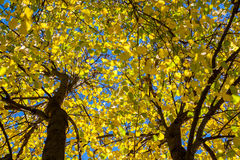 Autumn leaves against the sky Stock Image