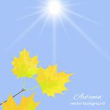 Autumn leaves against the sky Royalty Free Stock Image