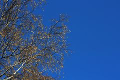Autumn leaves against the sky. Royalty Free Stock Images