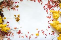 Autumn leaves against white background still life. Stock Photos
