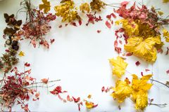 Autumn leaves against white background still life. Royalty Free Stock Photos