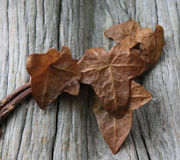 Autumn leaves against wood, texture. Stock Photo