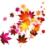 Autumn leaves in the air Royalty Free Stock Photography