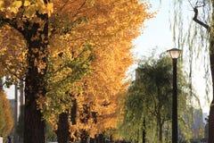 Autumn leaves along Hibiya avenue. Hibiya, Tokyo, Japan stock photos