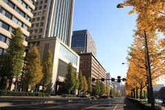 Autumn leaves along Hibiya avenue. Hibiya, Tokyo, Japan royalty free stock images