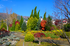 Autumn leaves along the lake Kawaguchi. Lake Kawaguchi is one of the Fuji Five Lakes. The best views of Mount Fuji can be enjoyed from the lake's northern shores stock images