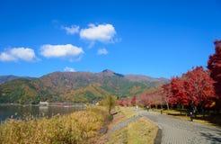 Autumn leaves along the lake Kawaguchi. Lake Kawaguchi is one of the Fuji Five Lakes. The best views of Mount Fuji can be enjoyed from the lake's northern shores royalty free stock photos