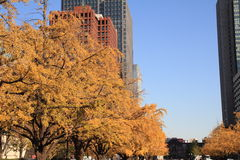 Autumn leaves along Miyuki avenue Royalty Free Stock Images