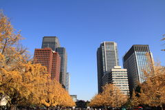 Autumn leaves along Miyuki avenue Stock Photos