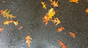 Autumn Leaves Along a wet path Royalty Free Stock Images