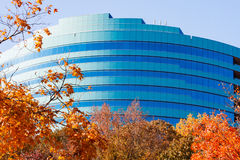 Autumn Leaves And Blue Curved Office Stock Photo