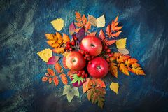 Autumn leaves, apples and berries on a dark background. Autumn background . Stock Photography