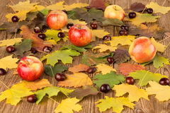 Autumn leaves and apples Royalty Free Stock Photo