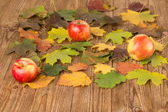 Autumn leaves and apples Royalty Free Stock Image