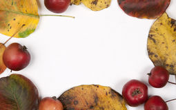 Autumn leaves and apples frame border background. Top view. Stock Photos
