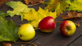 Autumn leaves and apples Stock Images