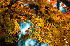 Autumn Leaves. Autumn is approaching and for many photographers, it's their favorite season for taking pictures. With the vibrant colors and cool air comes Stock Photos