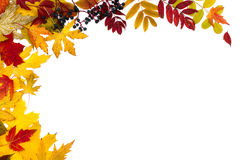Autumn Leaves Are Different Royalty Free Stock Photos