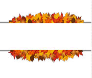 Autumn leaves around blank rectangle. Stock Photos