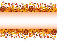 Autumn leaves around blank rectangle. Royalty Free Stock Photography
