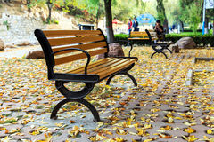 The autumn leaves Royalty Free Stock Photo